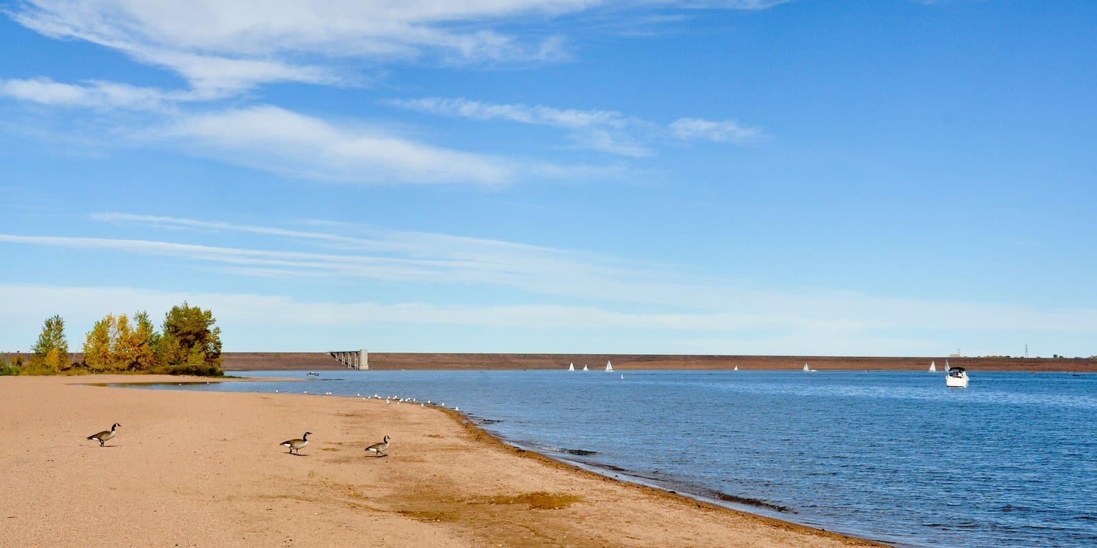 Chatfield Reservoir Dam Geese