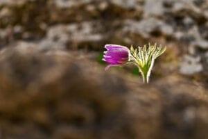Colorado Mental Health Lone Flower Denver Botanic Gardens
