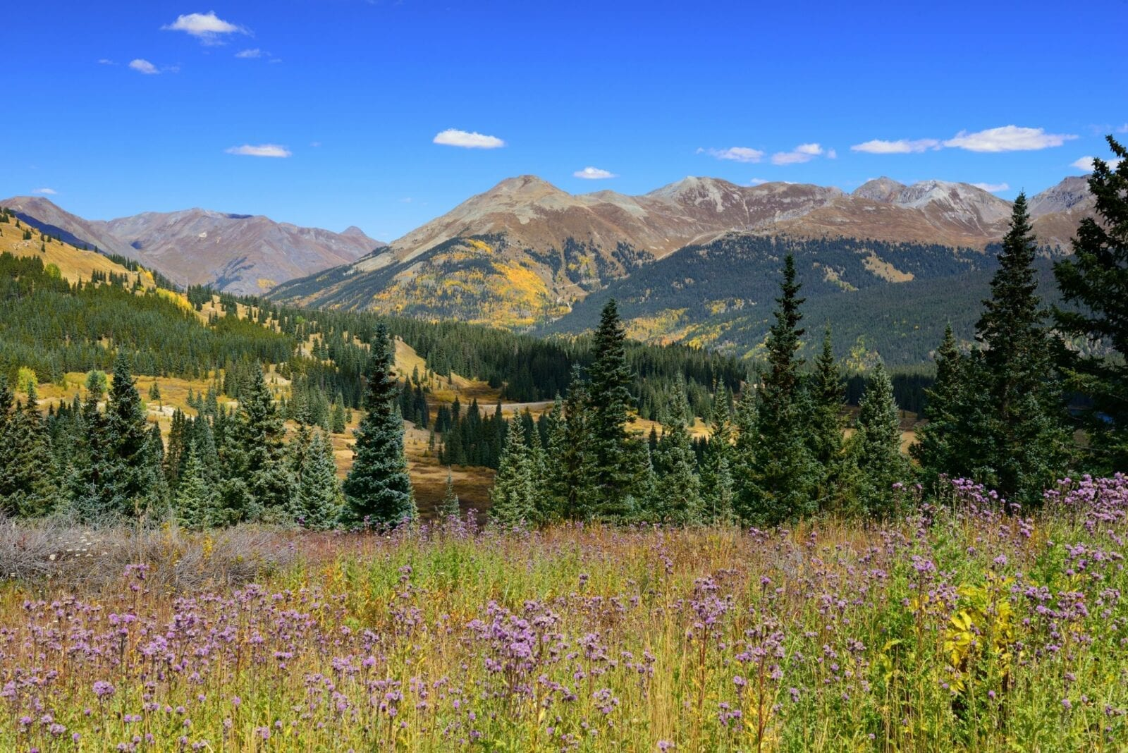 image of molas pass