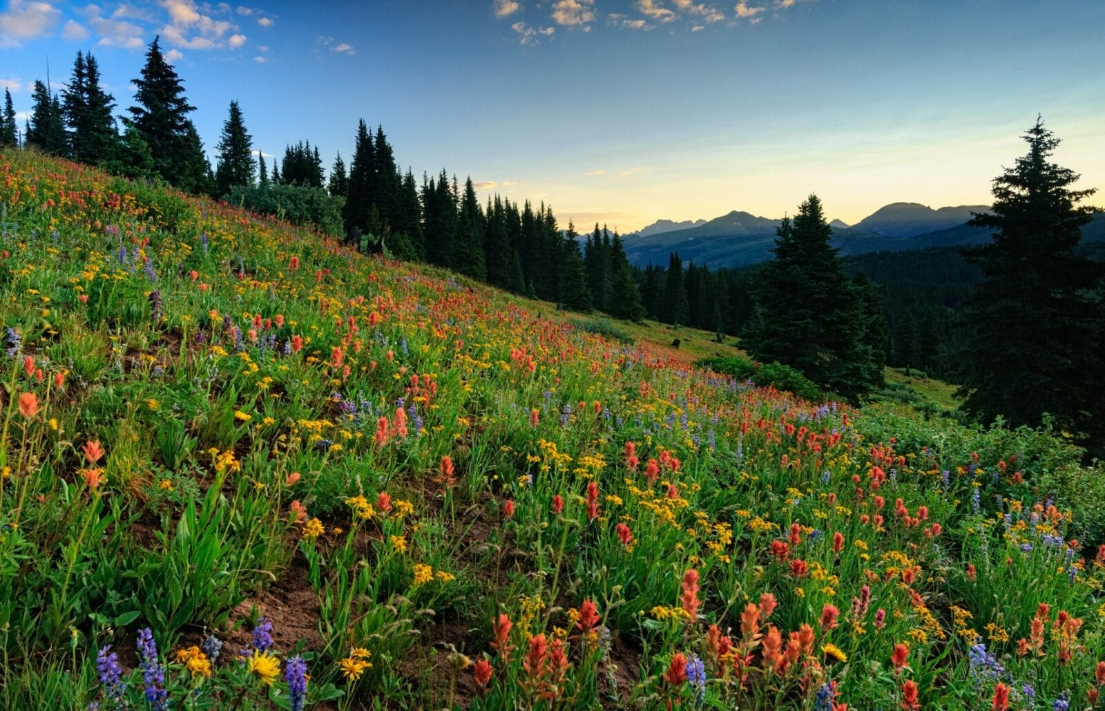 image of wildflowers along shrine pass