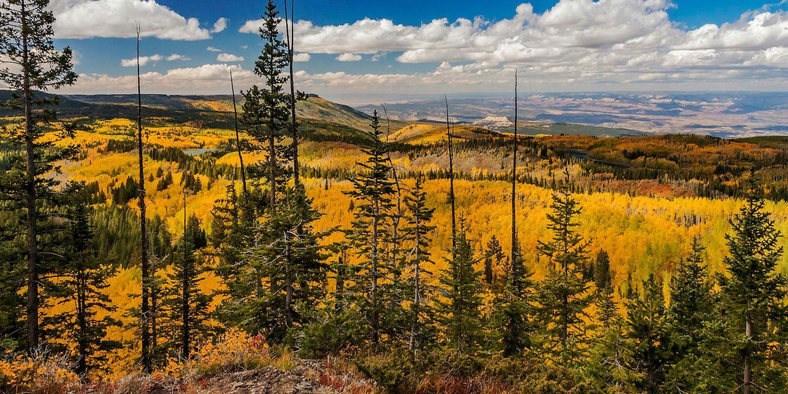 Grand Mesa National Forest Autumn Colors Colorado