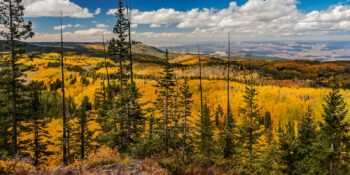 Grand Mesa National Forest Autumn Colors Colorado