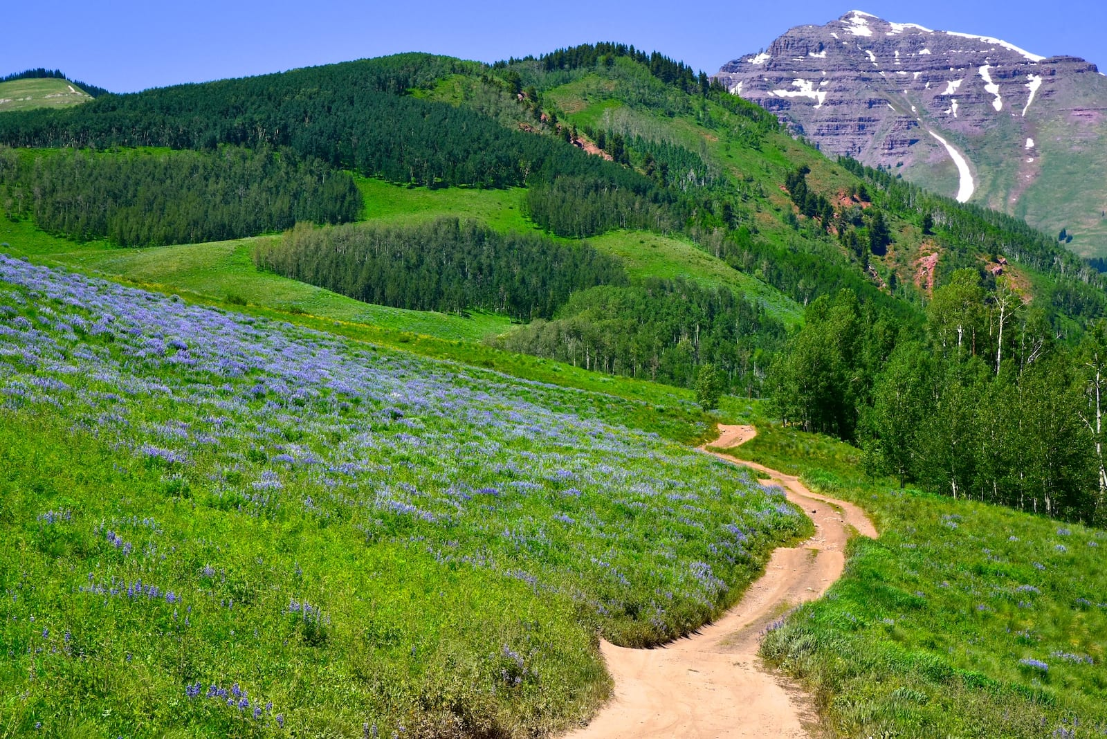 Crested Butte CO Top Hiking Trail Lupines Forest Road 738