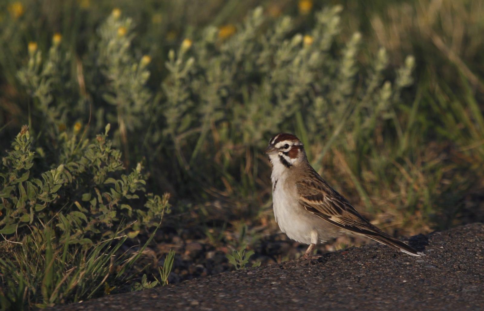 Bird Viewing at John Martin Reservoir, Colorado