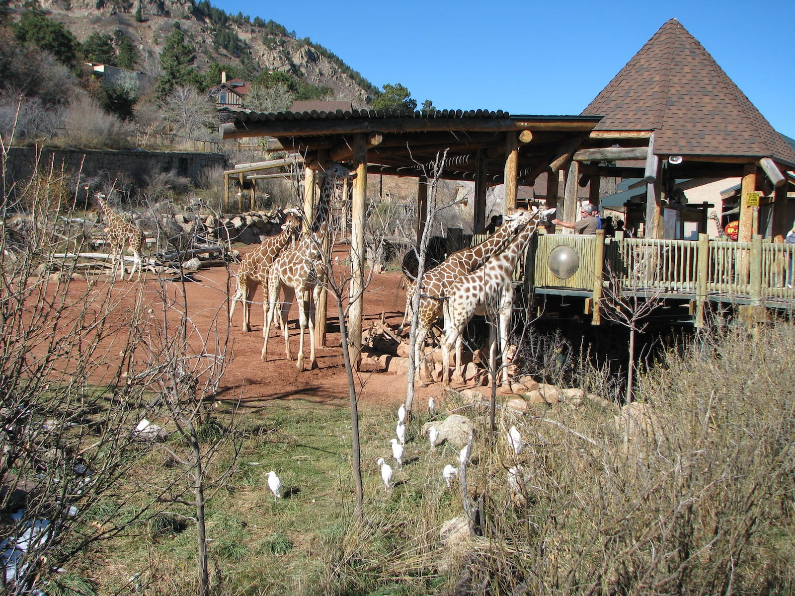 Cheyenne Mountain Zoo, Colorado
