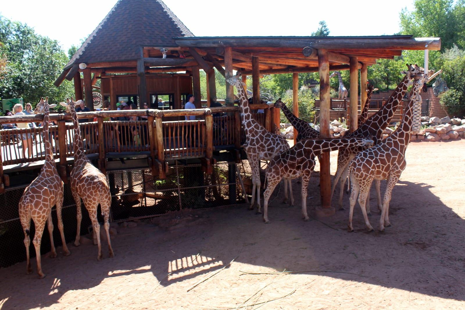 Cheyenne Mountain Zoo, CO