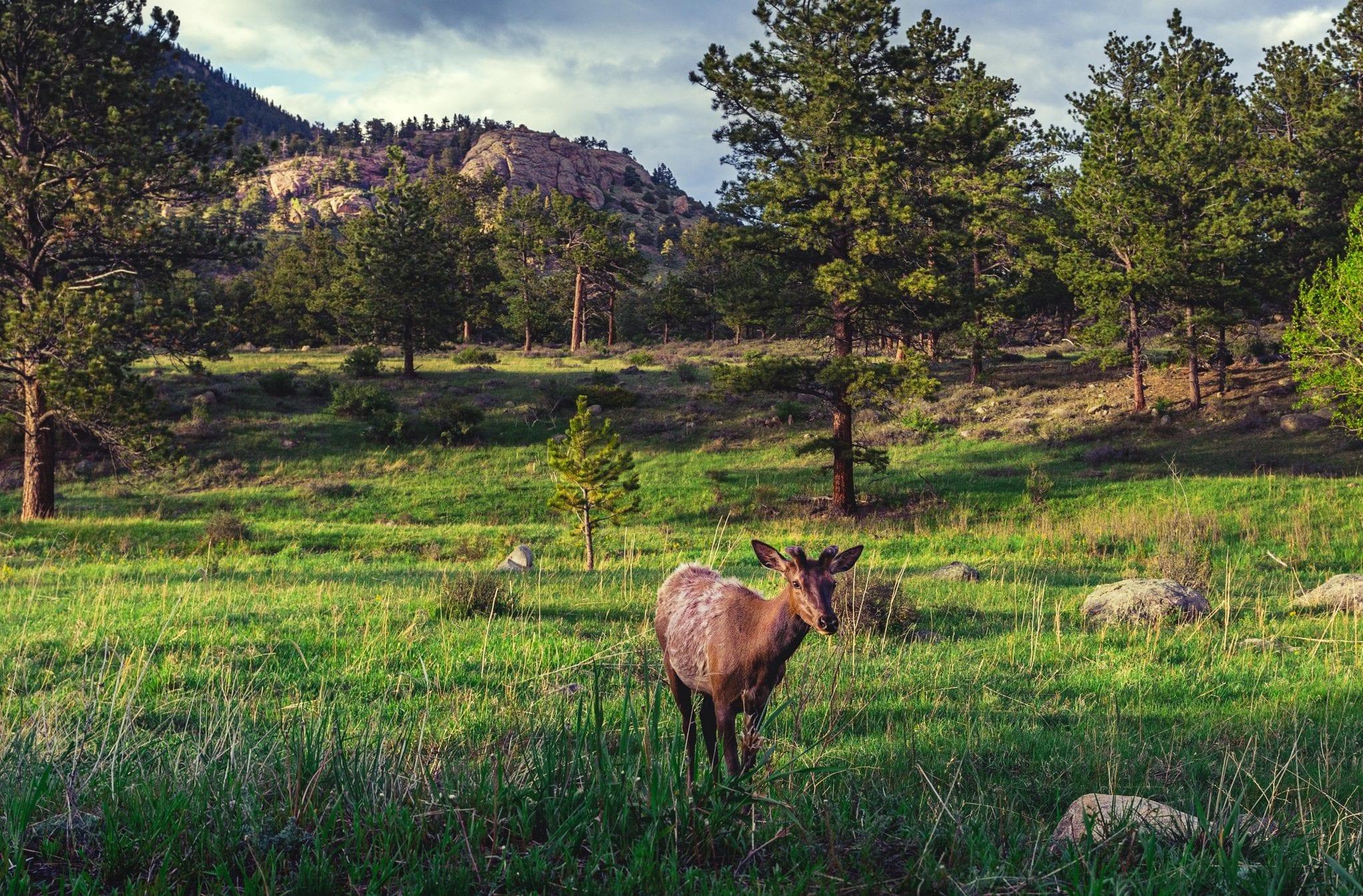 Elk Meadow Park – South Loop