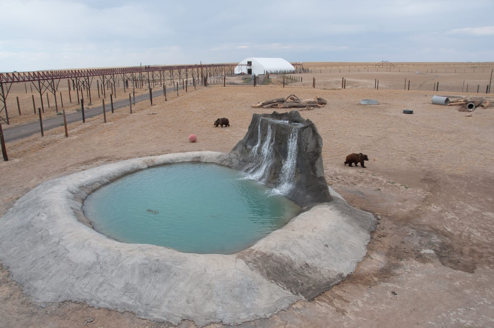 Grizzly Bear Habitat at Wild Animal Sanctuary Colorado
