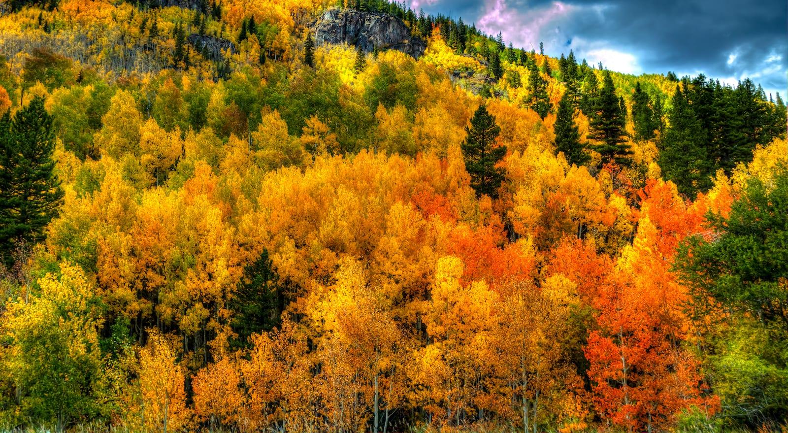 Best Fall Colors Aspen Grove Forest Eagle Colorado