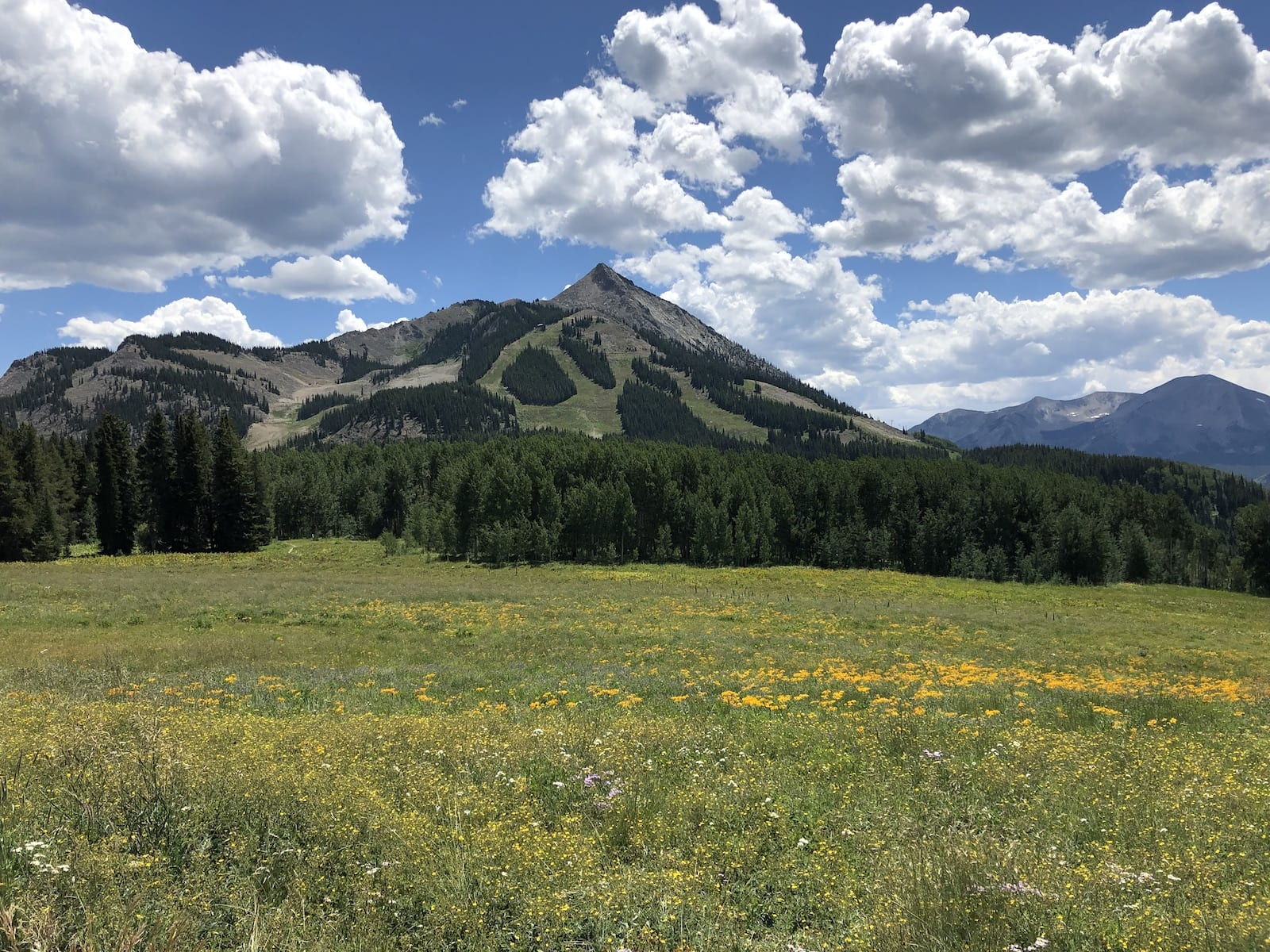 Crested Butte Mountain Colorado Wildflowers Top Hiking