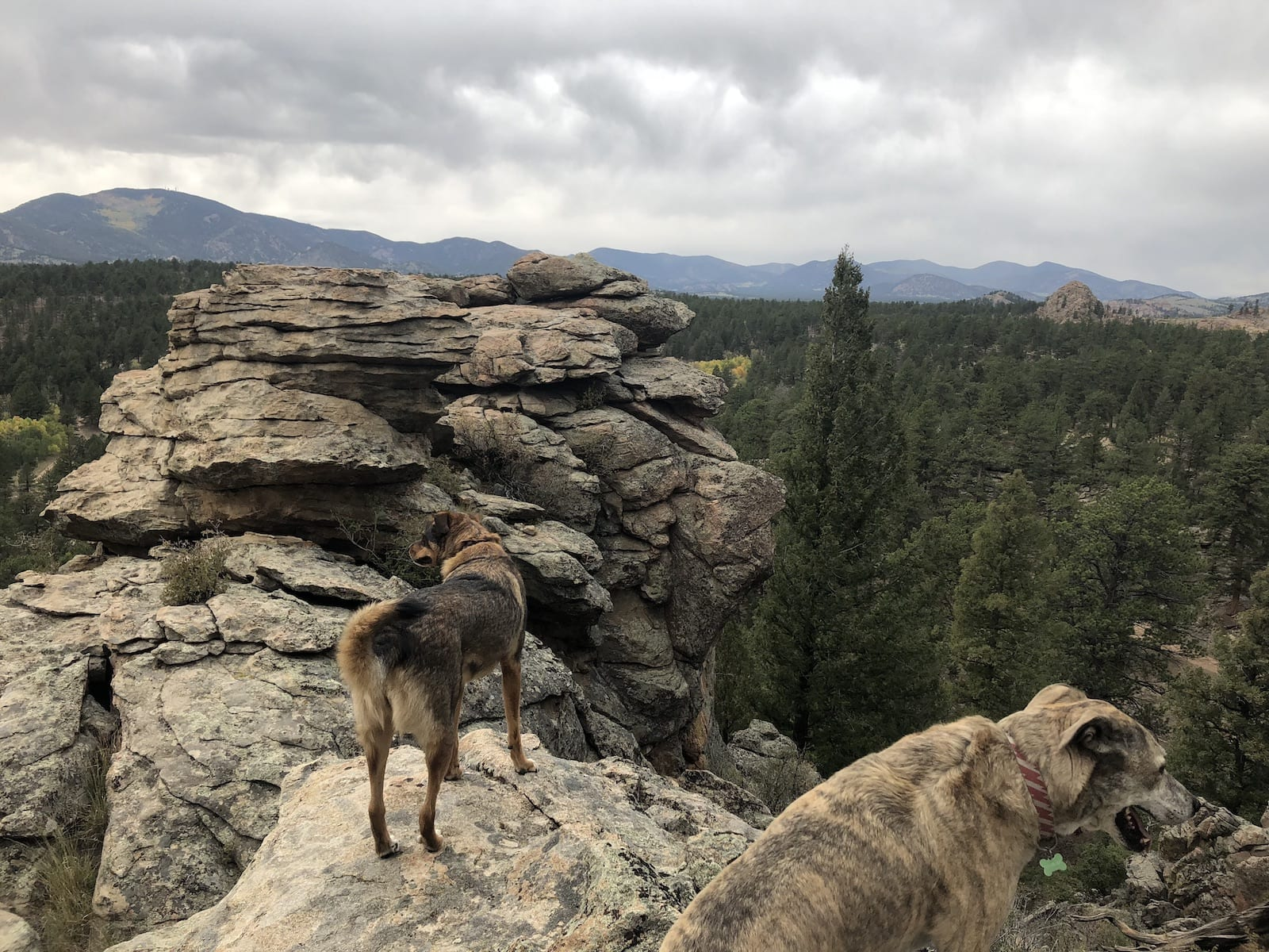 Park County Overlook Pike National Forest Dogs
