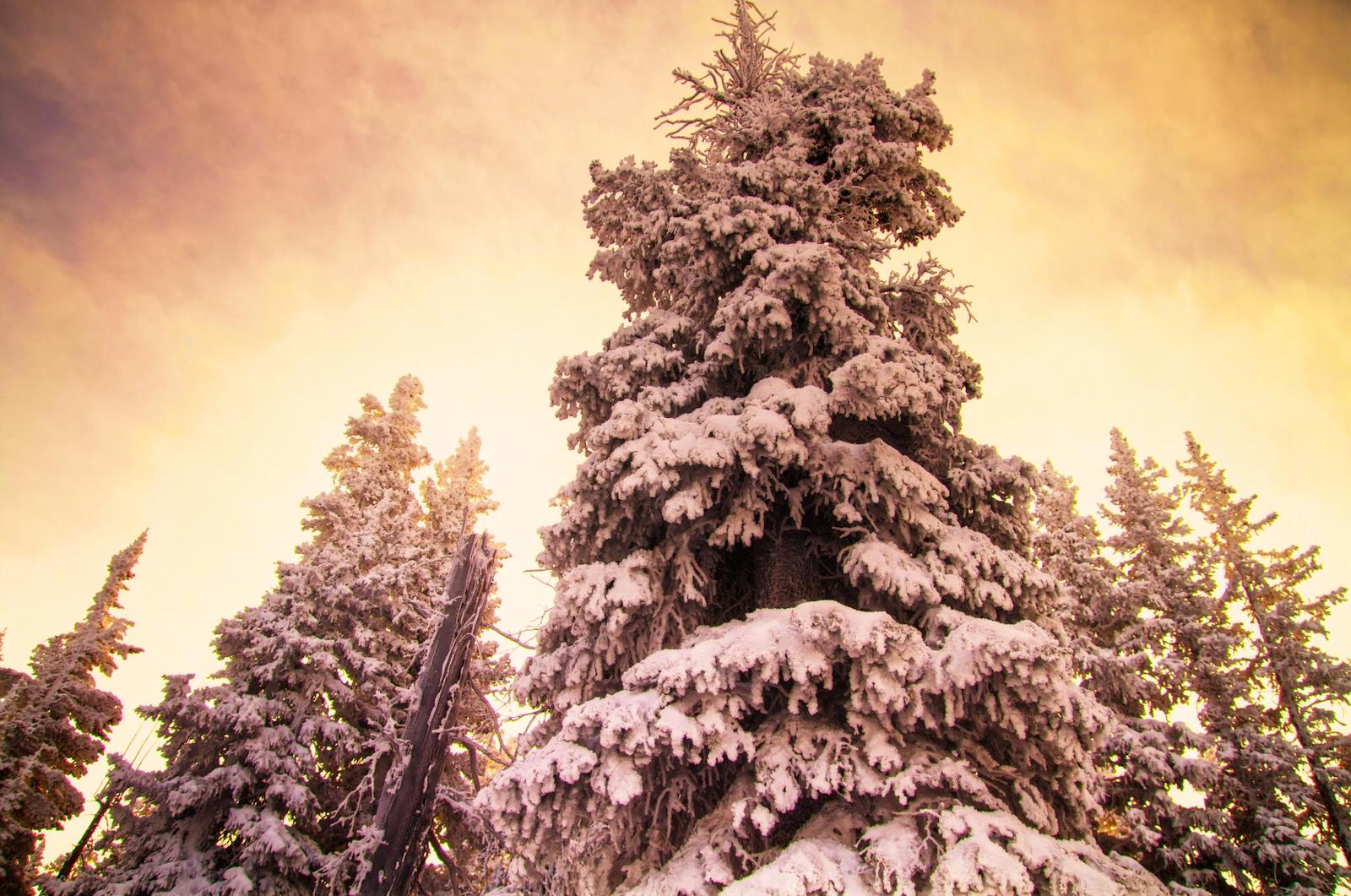 Vail Ski Resort Blue Sky Basin Evergreen Trees Covered in Snow