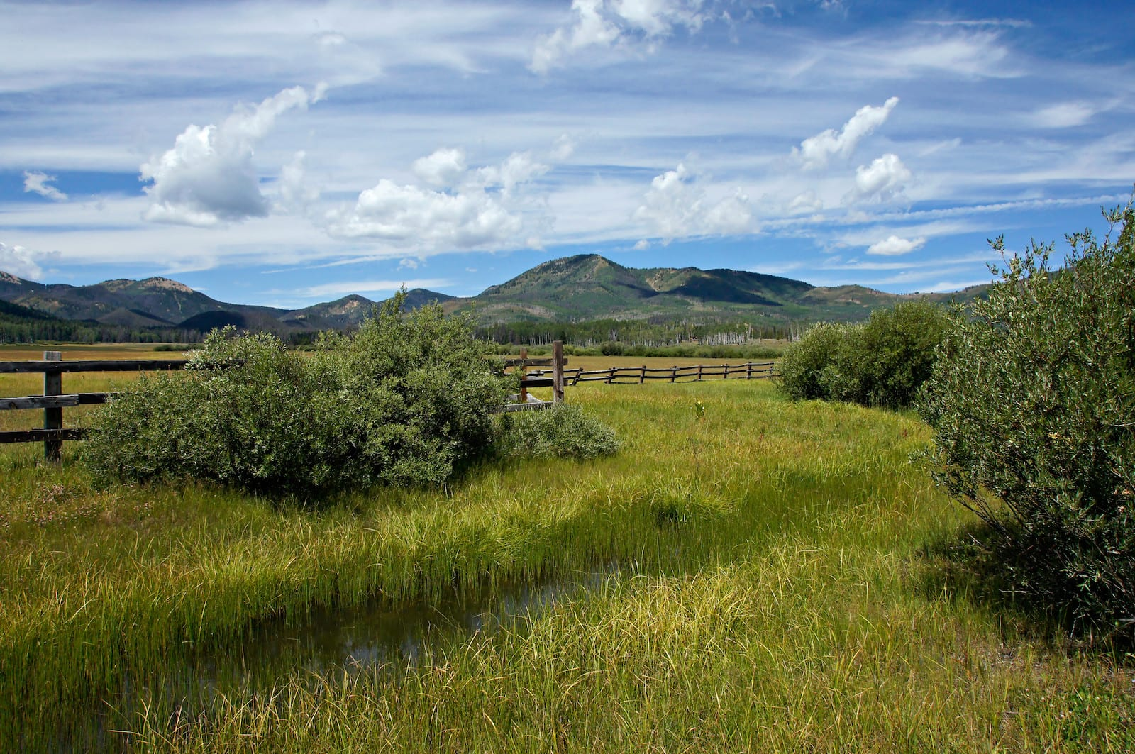 Steamboat Lake Mountain Meadow Colorado
