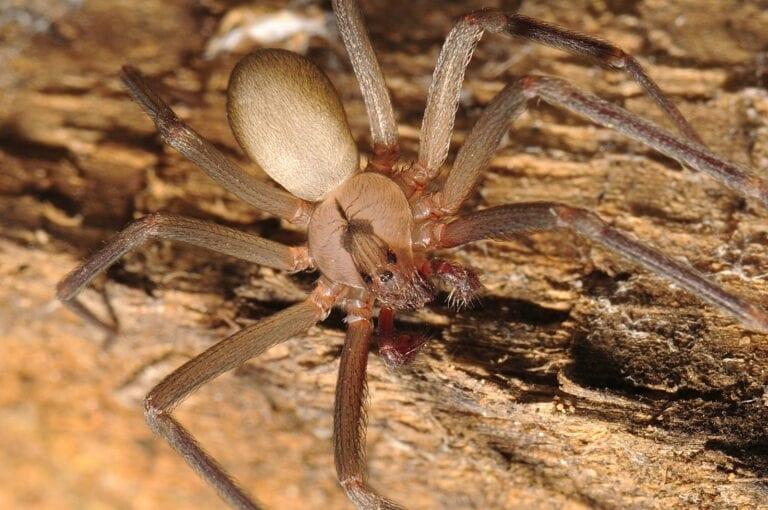 фото самые крупные и ядовитые пауки руна притягивает
