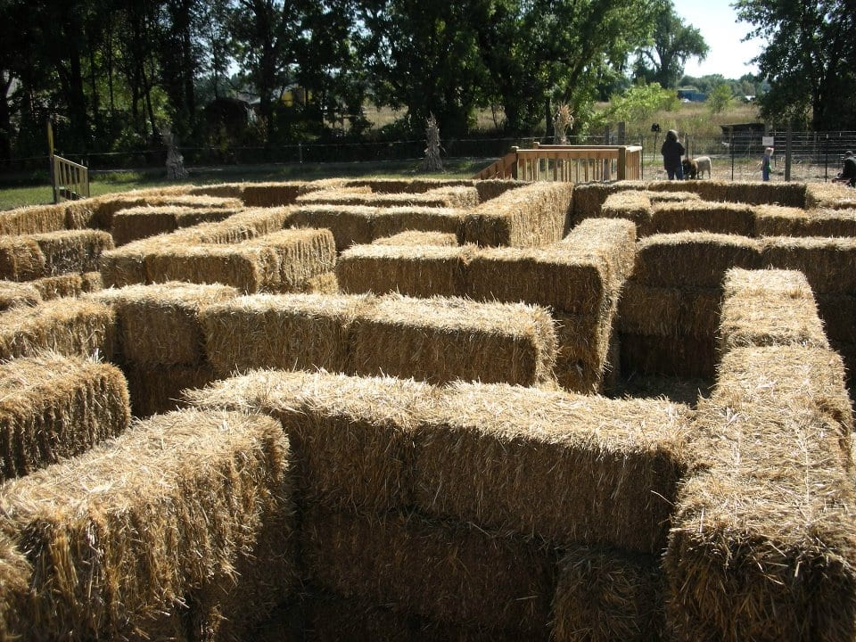 image of hay barrel maze