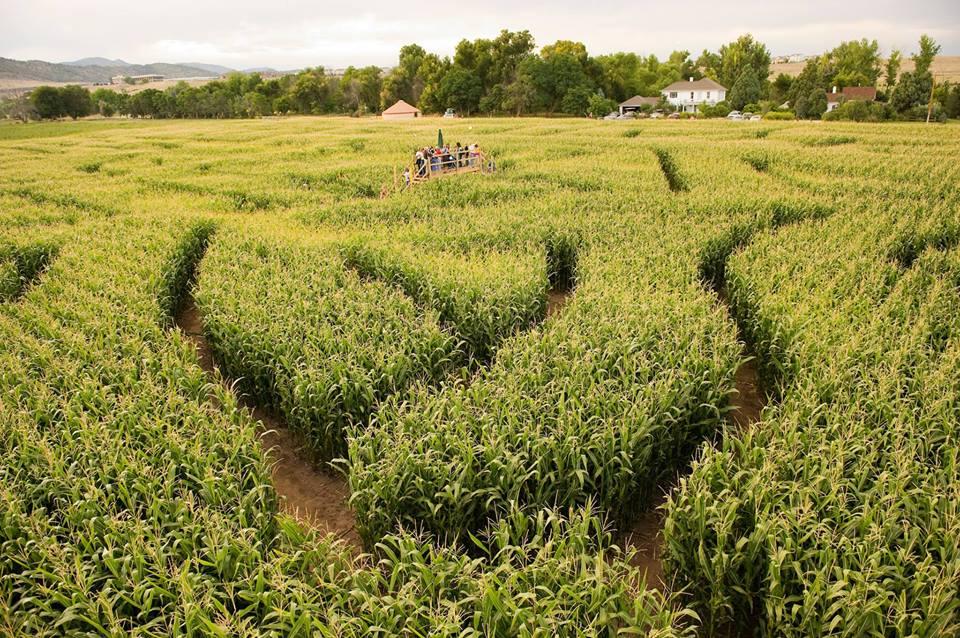 image of corn maze