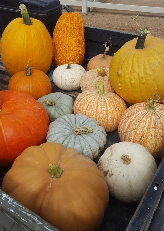 image of pumpkins and gourds