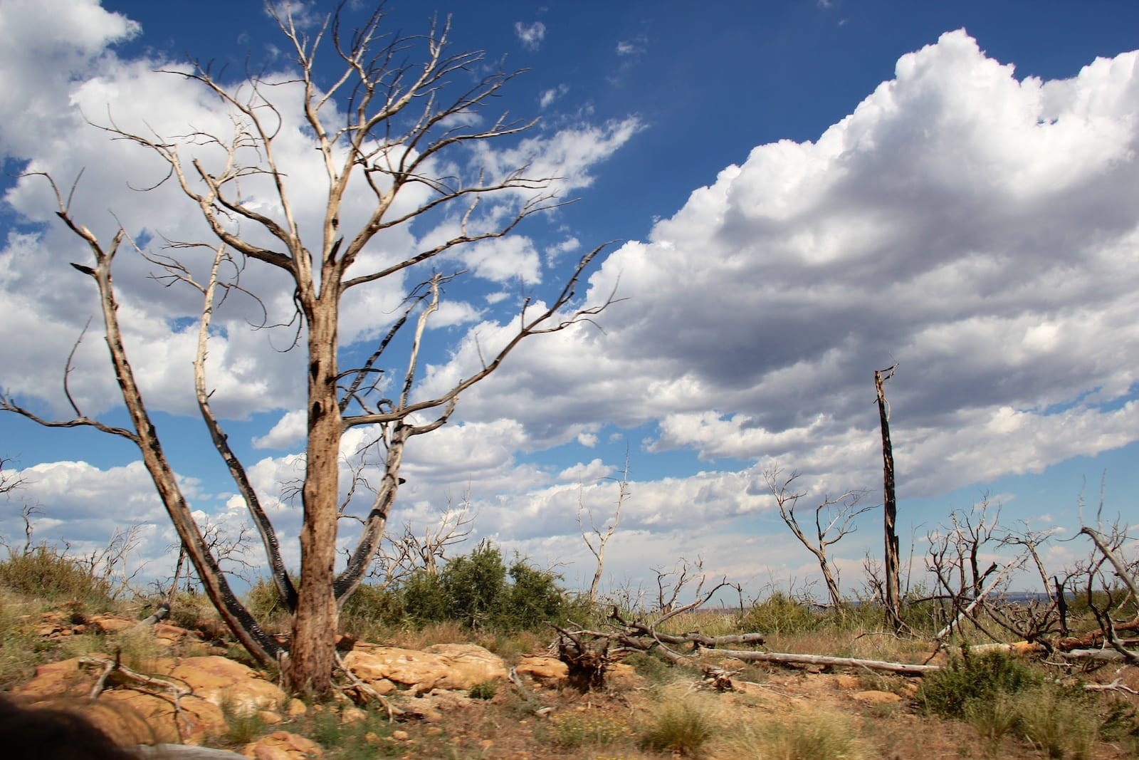 Mesa Verde National Park Hike Wetherhill Mesa Dead Tree