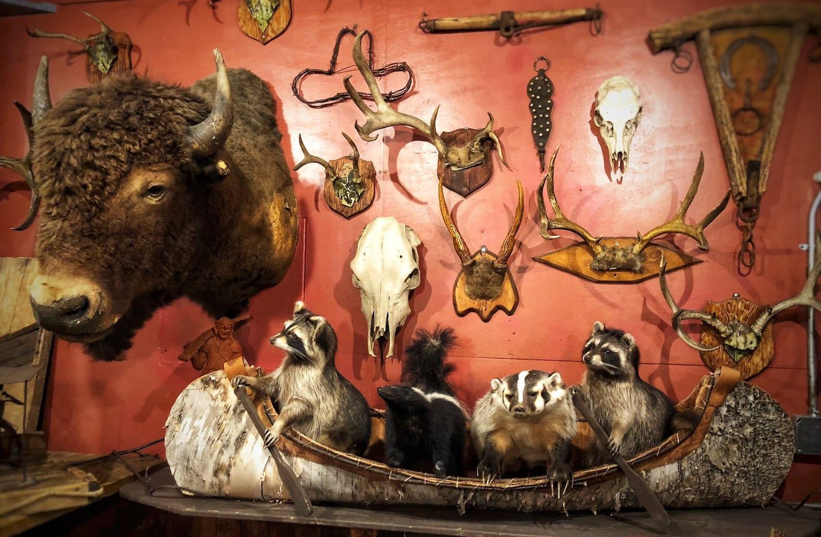 Famous Colorado Restaurants Buckhorn Exchange Denver Taxidermy