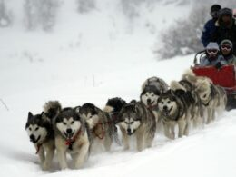 San Juan Sled Dogs Pagosa Springs