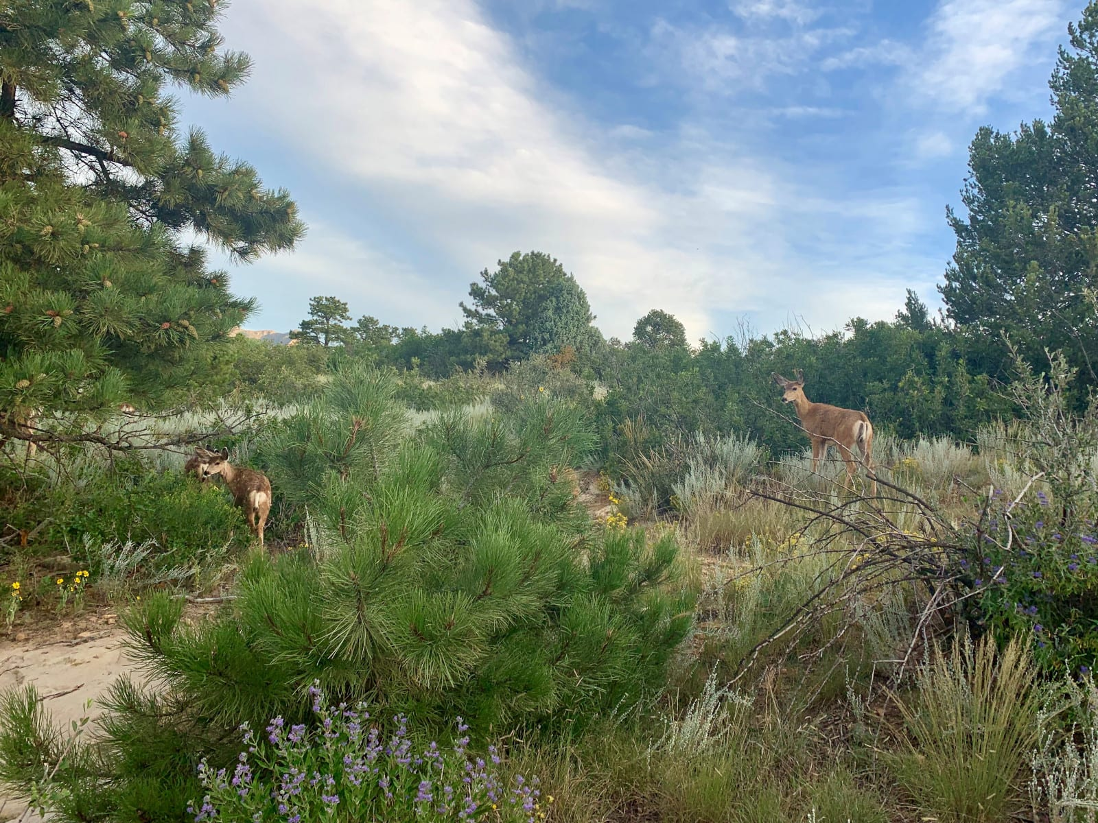 Ute Valley Park Deer Colorado Springs