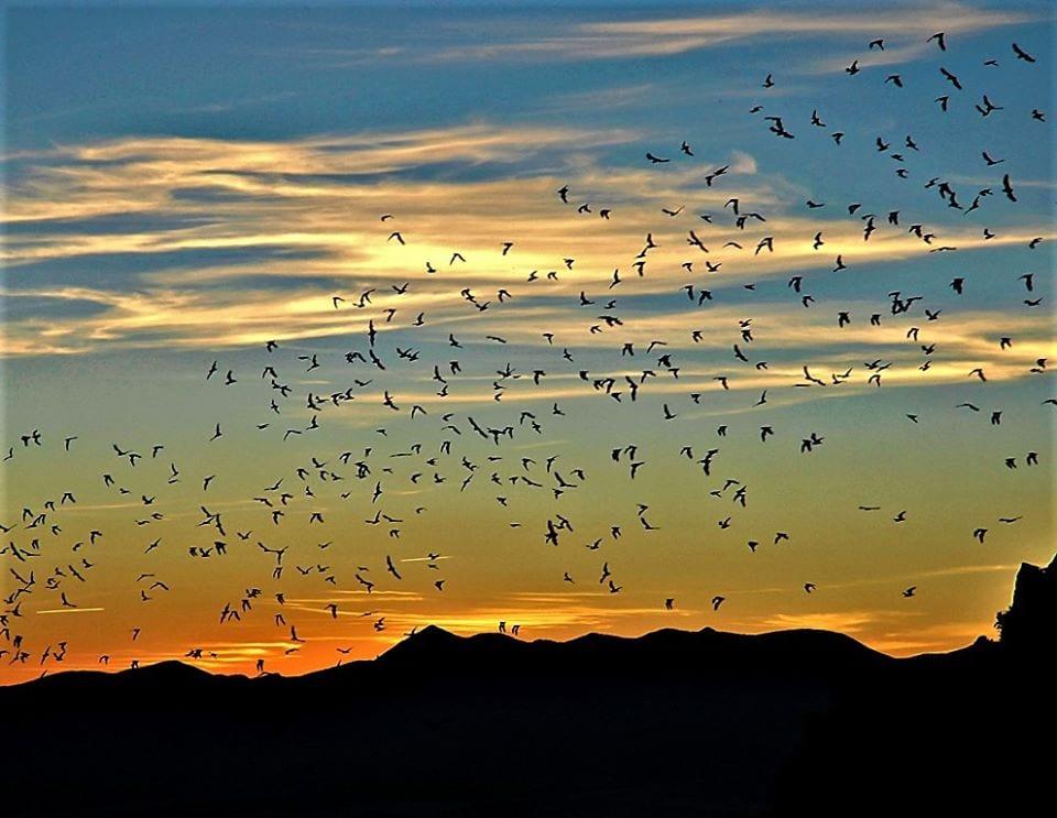 image of bats at orient land trust