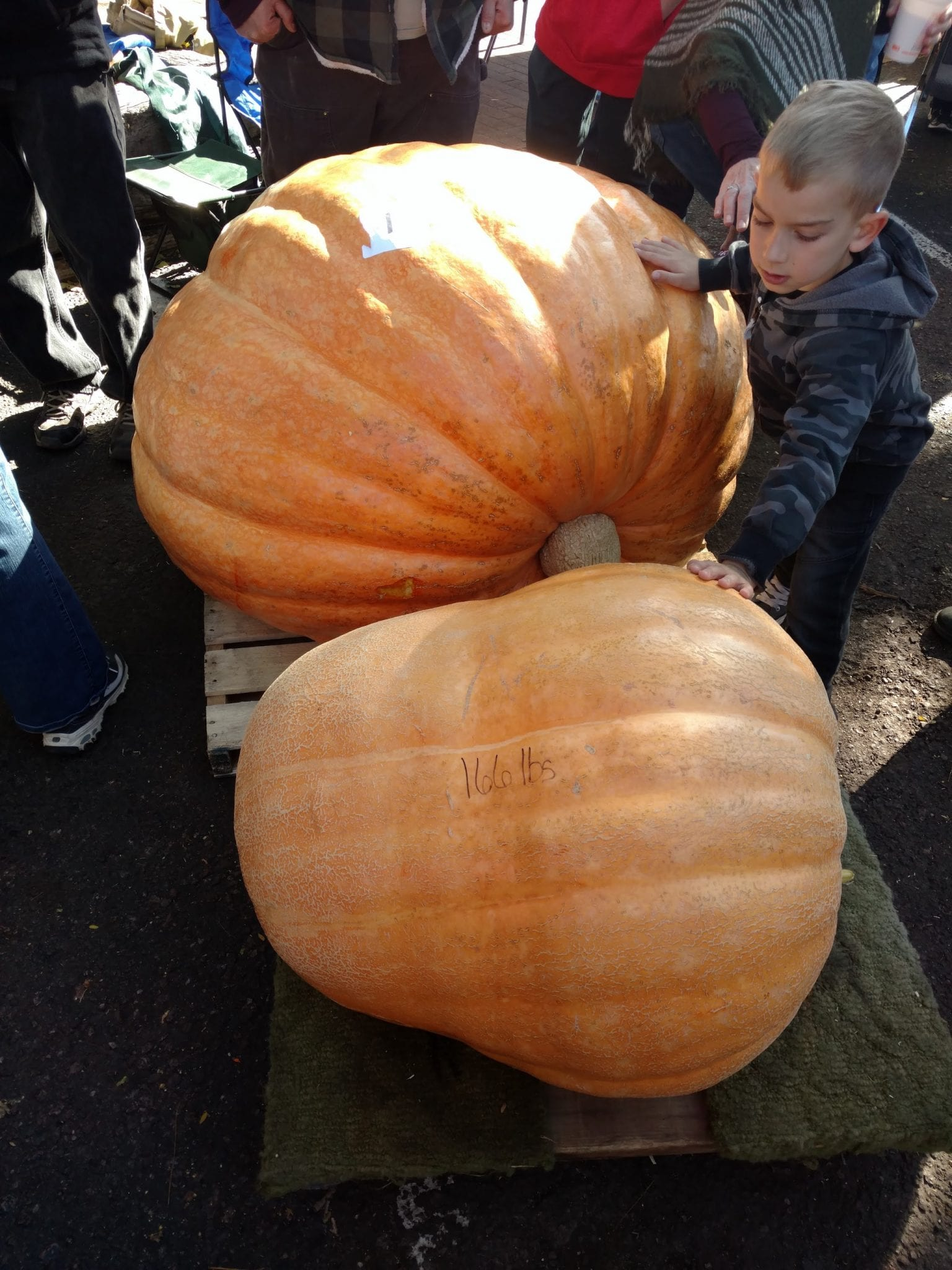 Giant Pumpkin Fest Old Colorado City Two Pumpkins