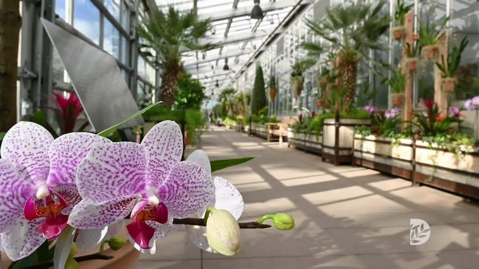 image of orchids at denver botanic gardens