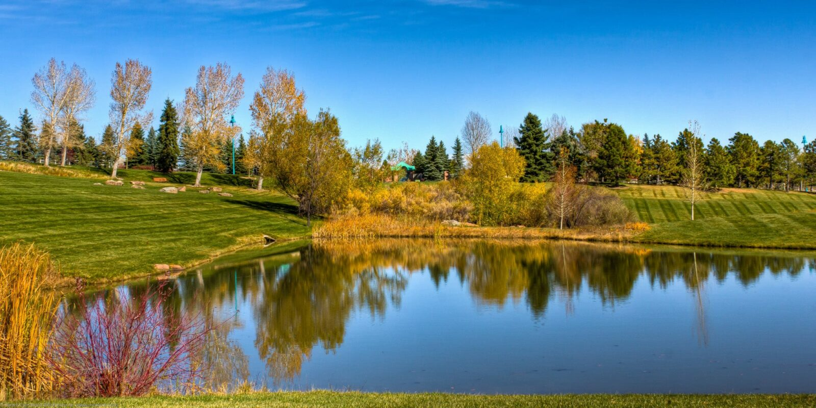 Superior Colorado Purple Park