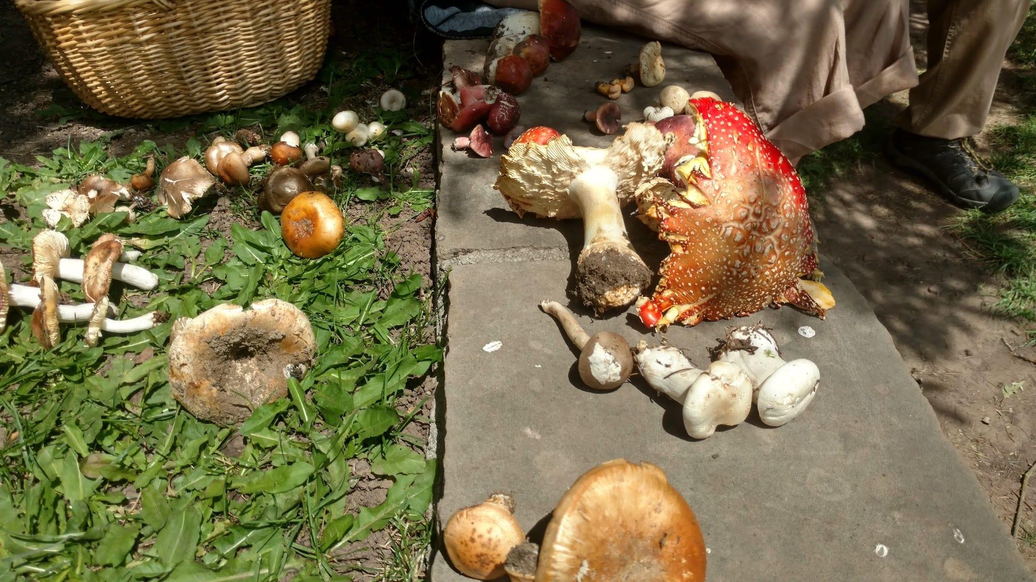 Telluride Mushroom Festival Shrooms on Ground