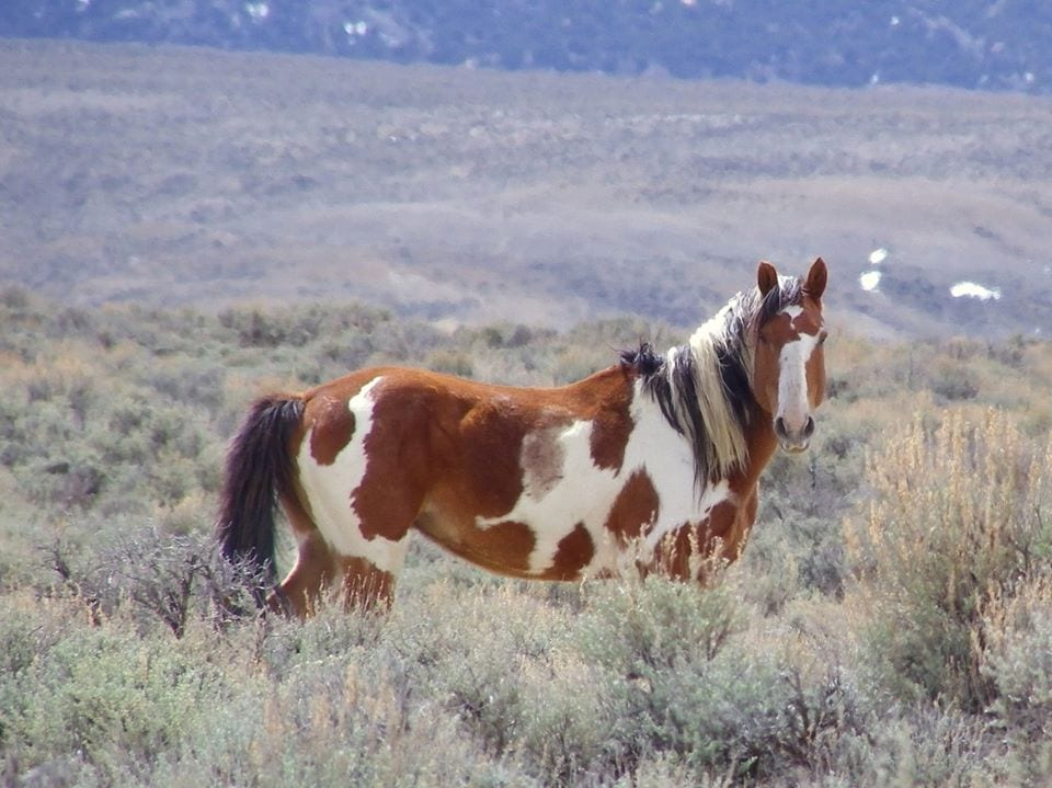 image of wild horse at sand wash basin