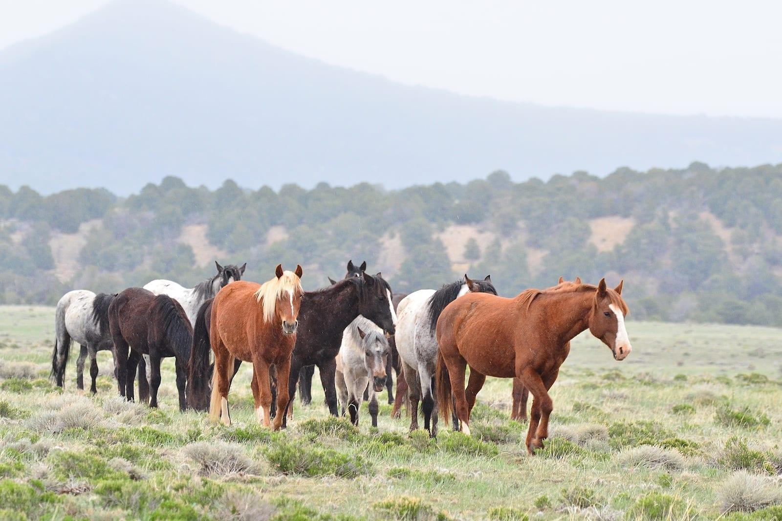 Wild Horses, Colorado