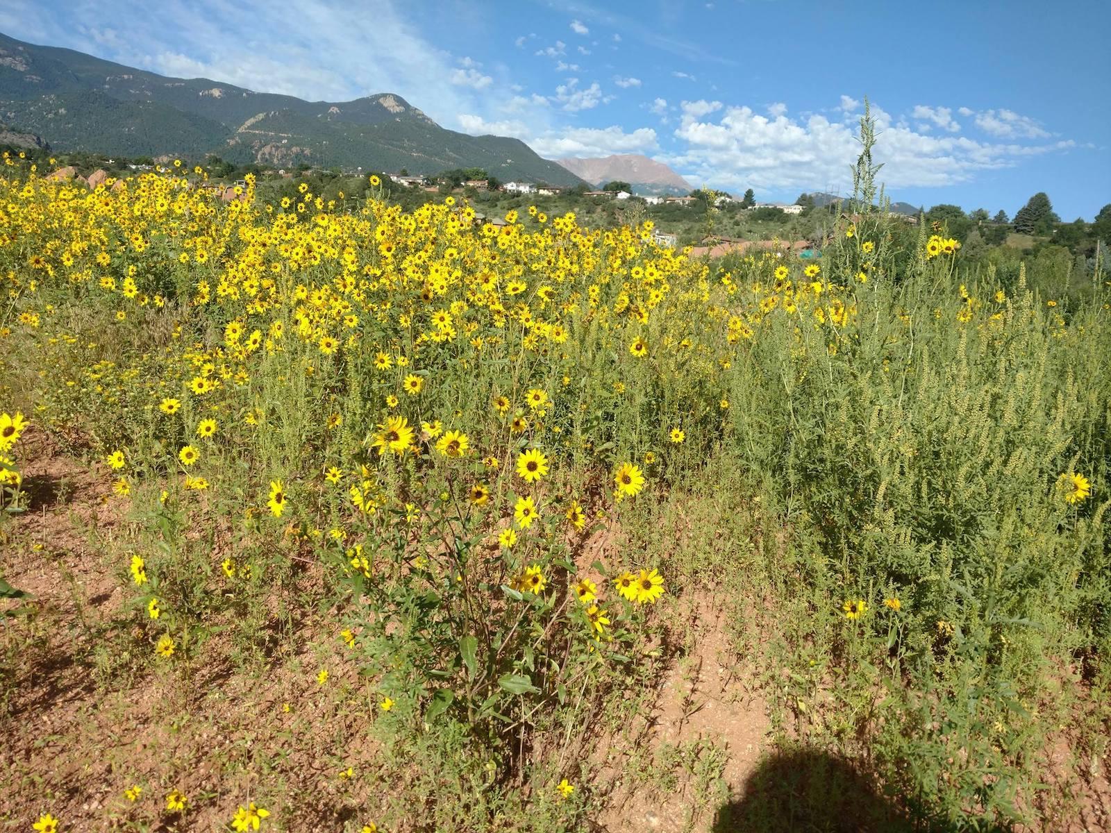 Colorado Springs Weather Spring Wildflowers
