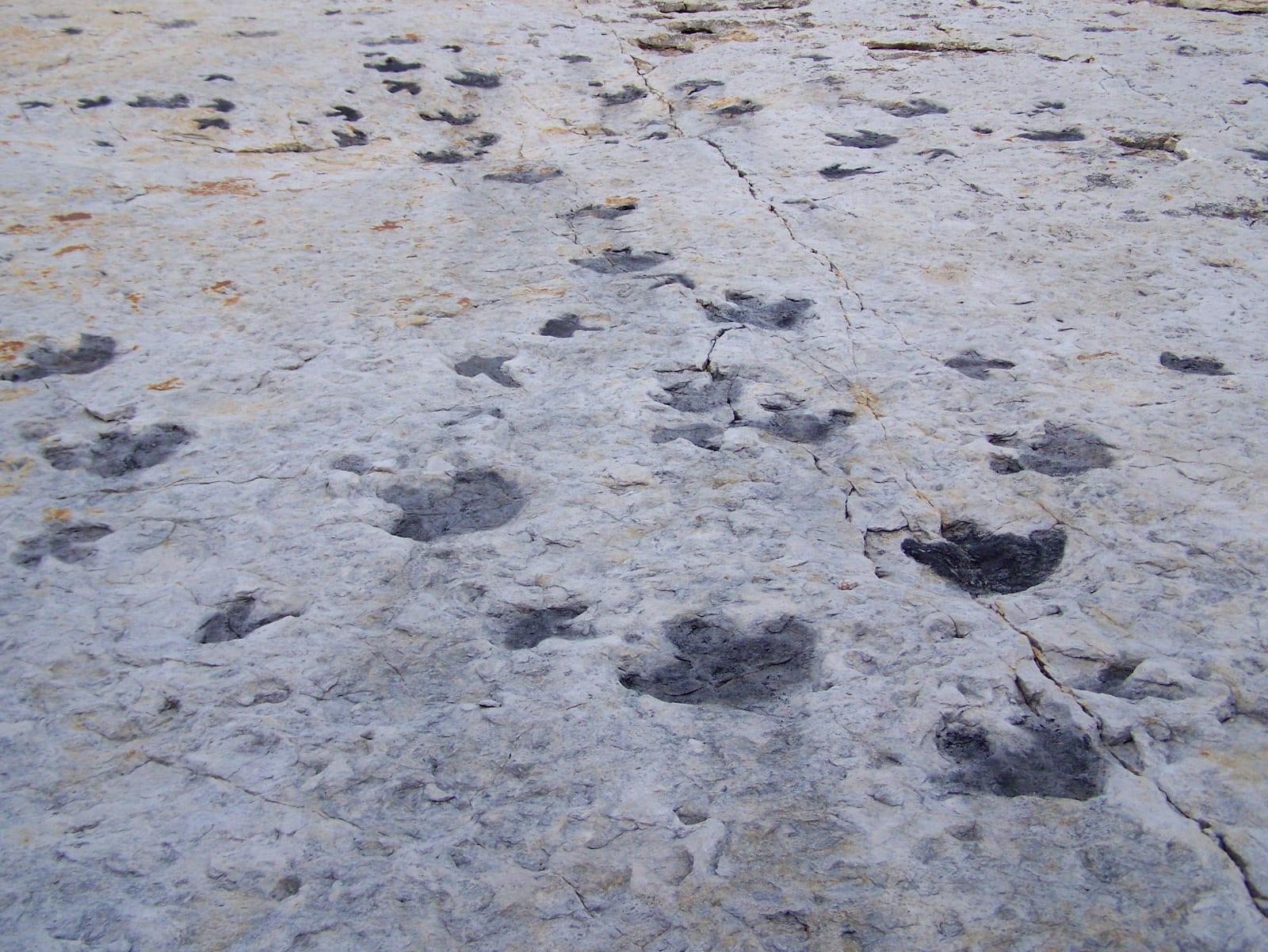 Dinosaur Ridge Tracks Morrison Fossil Area Colorado