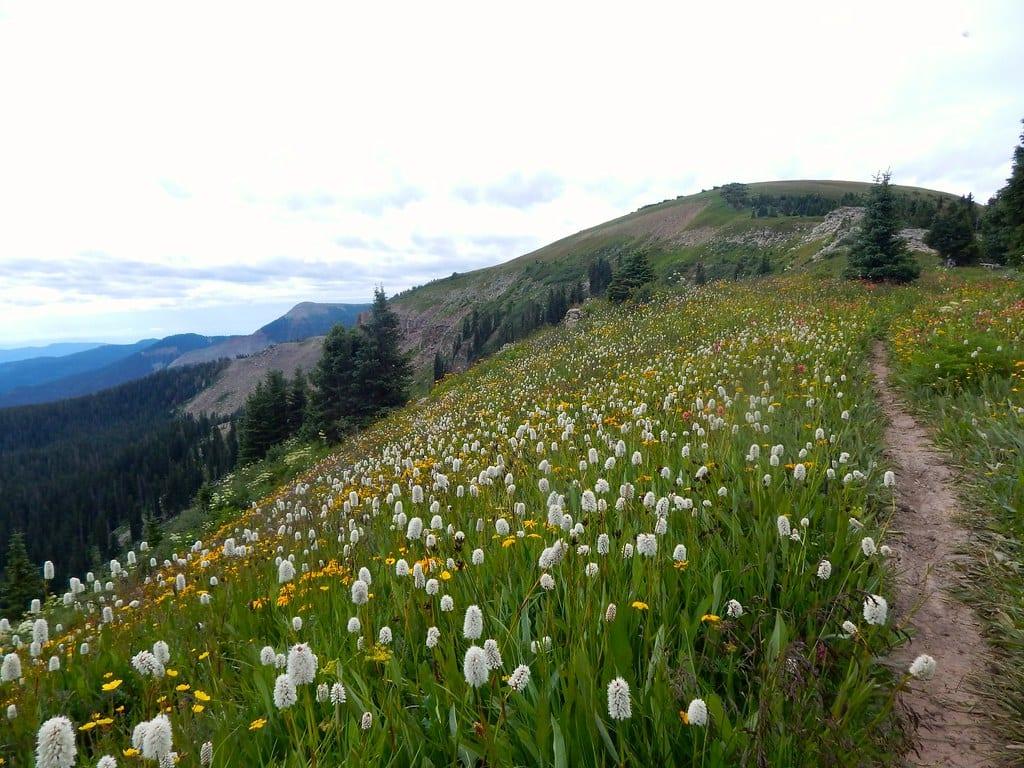 Colorado trail silverton to durango