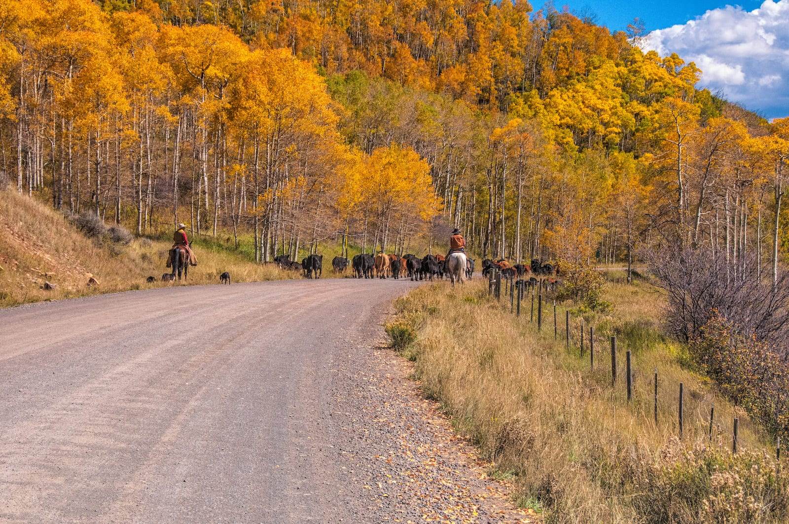 Flat Tops Trail, CO