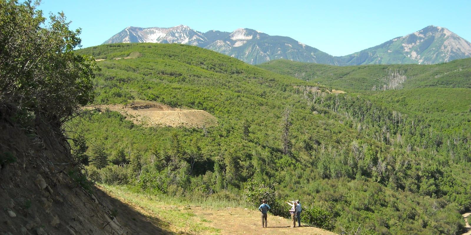 West Elk National Wilderness Area, CO