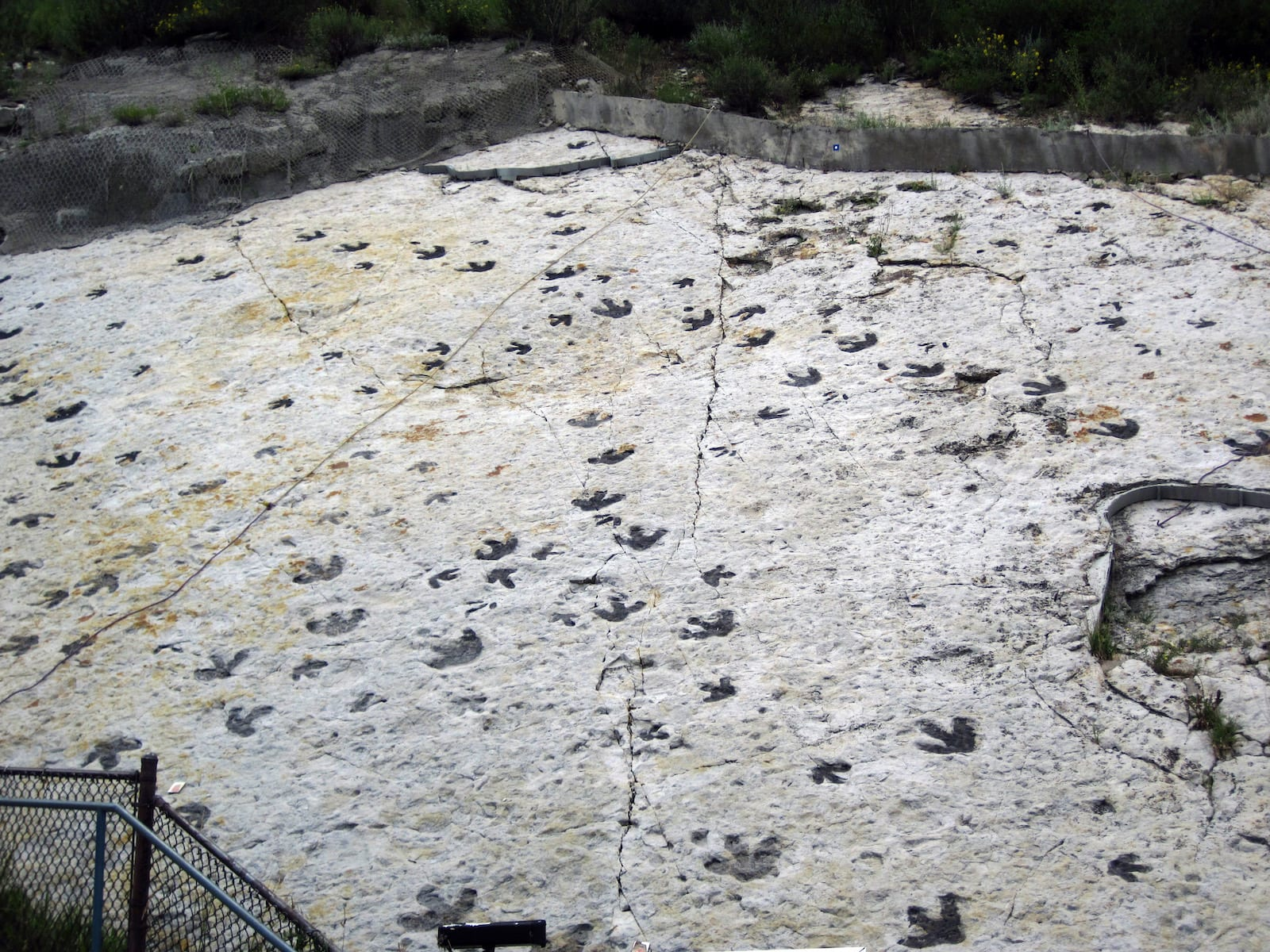 Dinosaur Footprints Dakota Sandstone Colorado