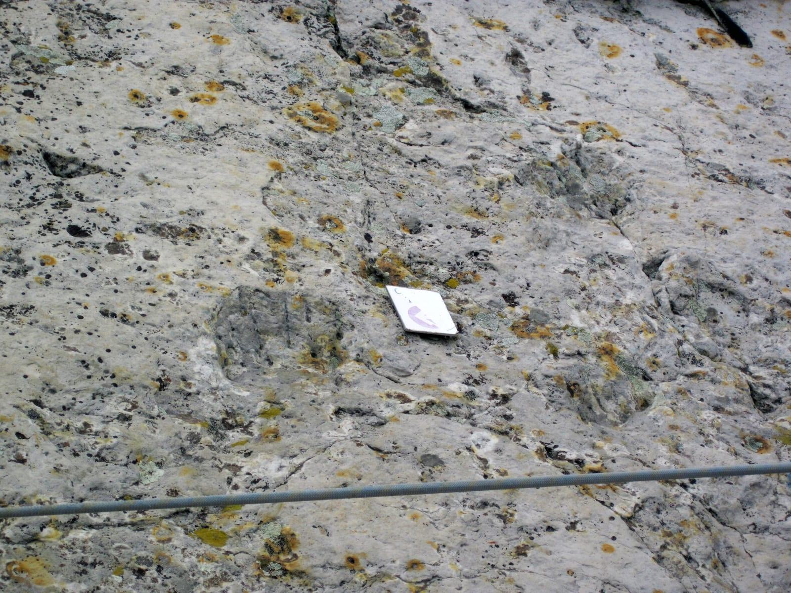 Crocodilian Fossilized Footprints Dinosaur Ridge Morrison CO