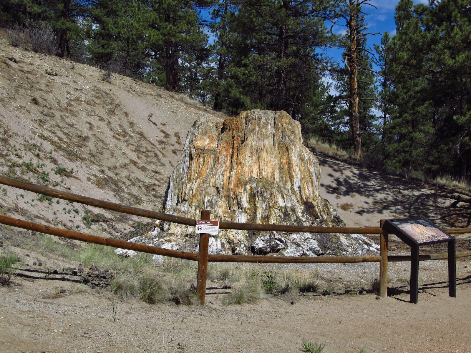 Florissant Fossil Beds National Monument Tre Stump