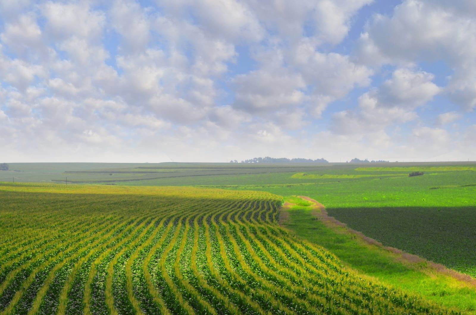 Nebraska Landscape Cornfield