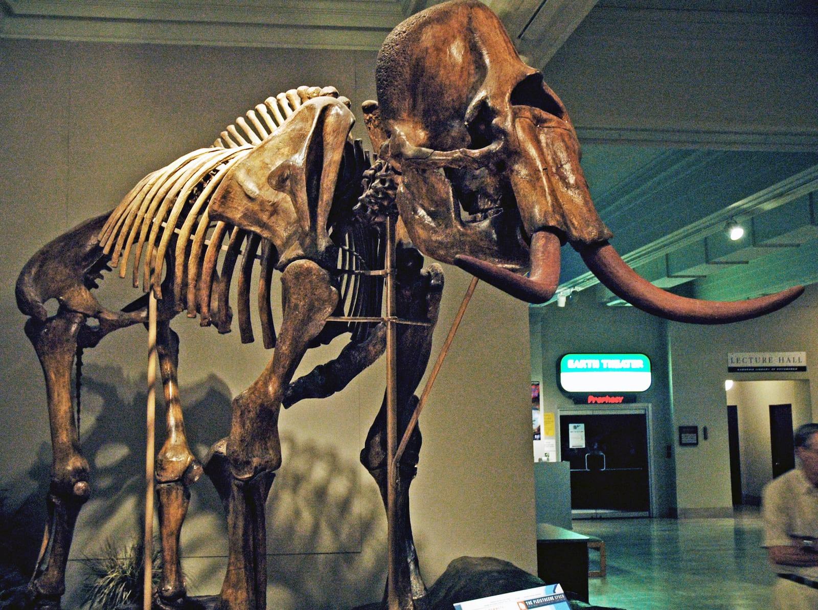 Paleoindian Clovis Columbian Mammoth Skeleton Platte River Colorado
