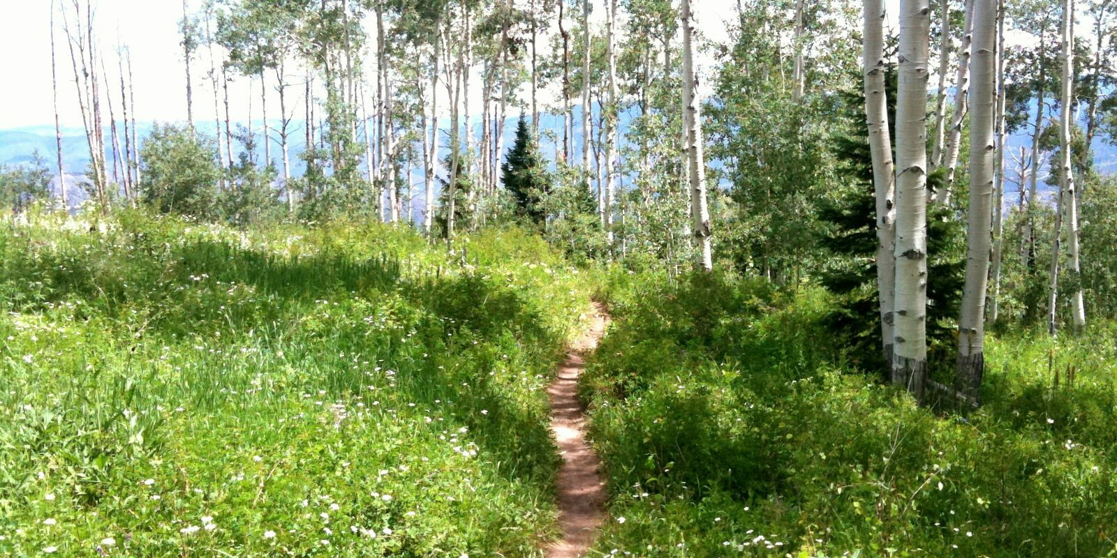 Government Trail in Aspen, Colorado