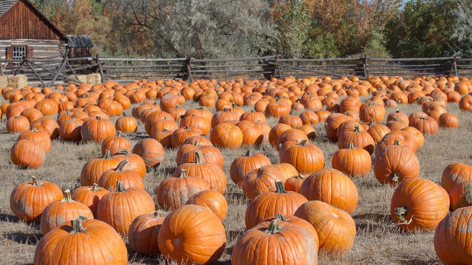 Halloween pumpkin in Littleton Museum, CO