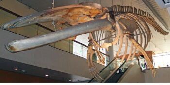 May Natural History Museum in Colorado Springs
