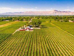 mesa park vineyard palisade colorado