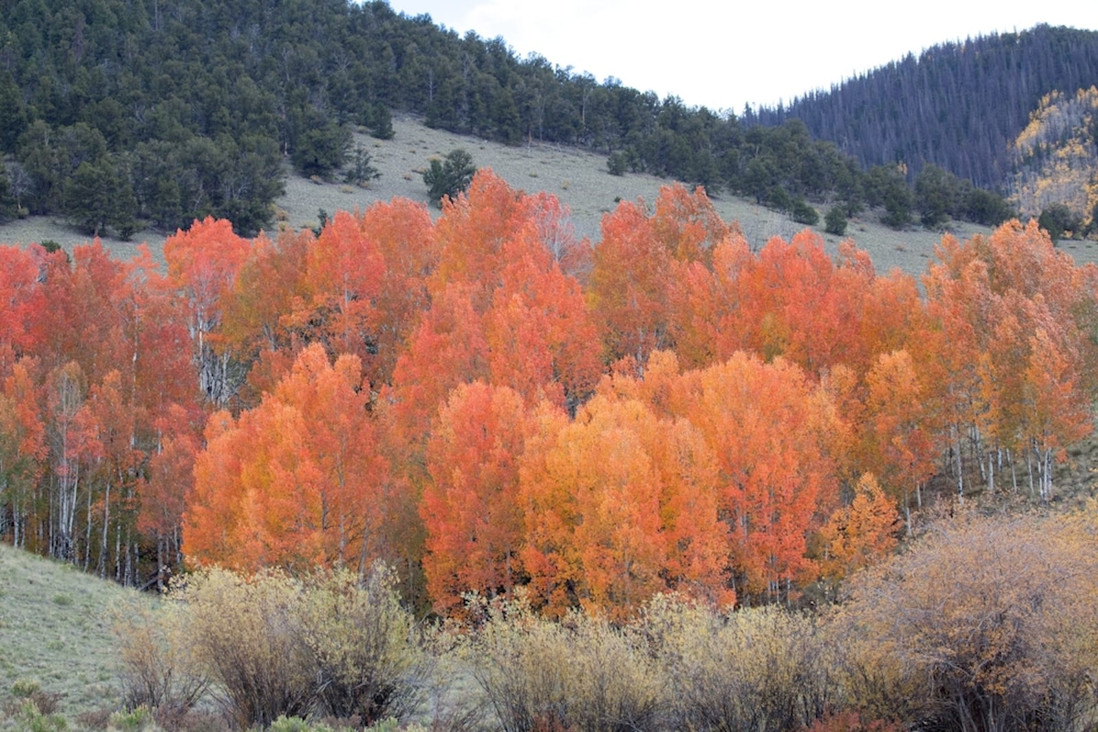 Rio Grande National Forest, CO