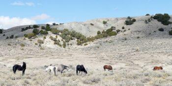 Wild Horse Warriors for Sand Wash Basin, CO