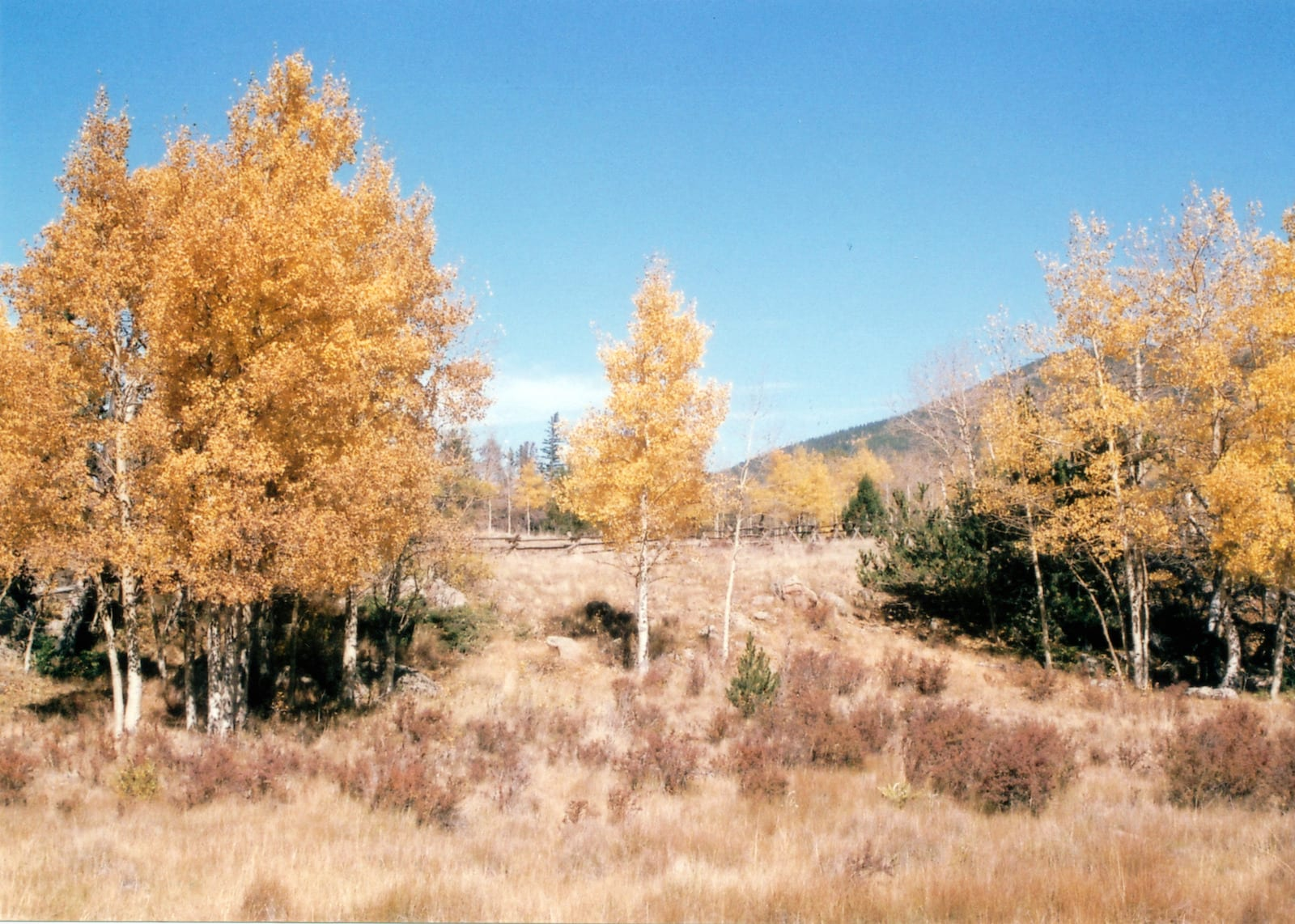 Bailey Colorado Autumn Aspens