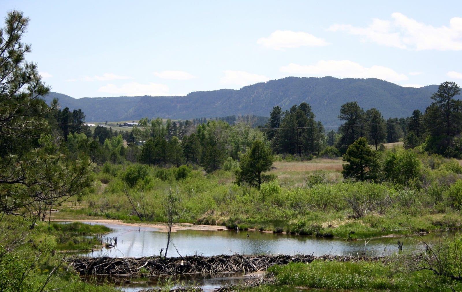 Larkspur CO Old Beaver Pond